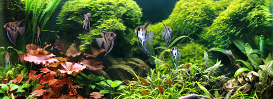 Freshwater Aquarium Lighting - Aquarium-Lighting-Guide.com