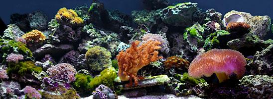 Home » Saltwater Aquarium Lighting » Reef Aquarium Lighting & Reef Aquarium Lighting - Metal Halide T5 VHO Fluorescent ... azcodes.com