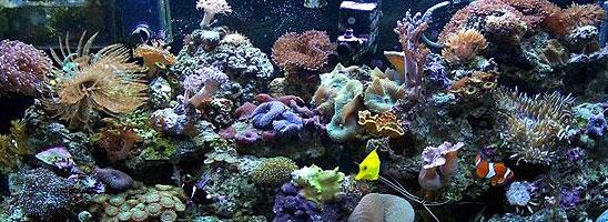 Vho Very High Output Fluorescent Aquarium Lighting